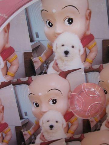 ビションフリーゼこいぬ関東ビションフリーゼトリミング東京フントヒュッテ文京区トリミングビションhundehutteビションフリーゼ再会なかよしかわいいビション20.jpg