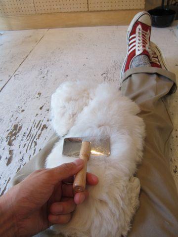 ビションフリーゼフントヒュッテ東京子犬こいぬかわいいビションフリーゼのいるお店文京区駒込ペットサロンhundehutteトリミングビションBichon Friseフランスの犬白い犬213.jpg