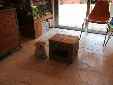 ビションフリーゼフントヒュッテ東京子犬こいぬかわいいビションフリーゼのいるお店文京区駒込ペットサロンhundehutteトリミングビションBichon Friseフランスの犬白い犬232.jpg