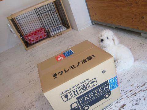 ビションフリーゼフントヒュッテ東京子犬こいぬかわいいビションフリーゼのいるお店文京区駒込ペットサロンhundehutteトリミングビションBichon Friseフランスの犬白い犬234.jpg