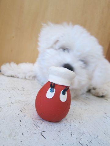 ビションフリーゼフントヒュッテ東京子犬こいぬかわいいビションフリーゼのいるお店文京区駒込ペットサロンhundehutteトリミングビションBichon Friseフランスの犬白い犬276.jpg