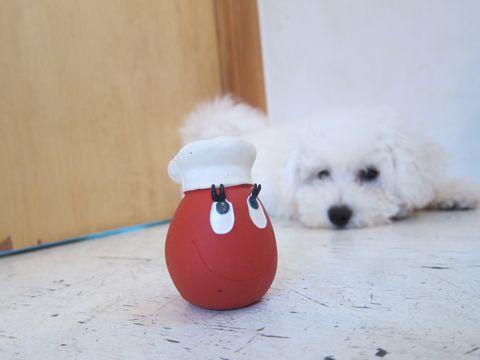 ビションフリーゼフントヒュッテ東京子犬こいぬかわいいビションフリーゼのいるお店文京区駒込ペットサロンhundehutteトリミングビションBichon Friseフランスの犬白い犬278.jpg