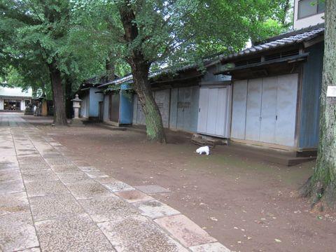 ビションフリーゼフントヒュッテ東京子犬こいぬかわいいビションフリーゼのいるお店文京区駒込ペットサロンhundehutteトリミングビションBichon Friseフランスの犬白い犬285.jpg