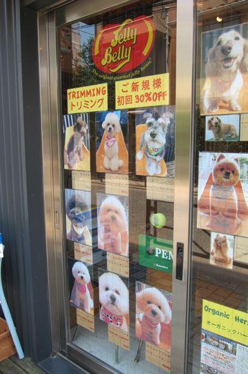 ビションフリーゼトリミング文京区フントヒュッテナノオゾンペットシャワー使用トリミングサロン東京hundehutteビションフリーゼこいぬ初めてのトリミング子犬26.jpg