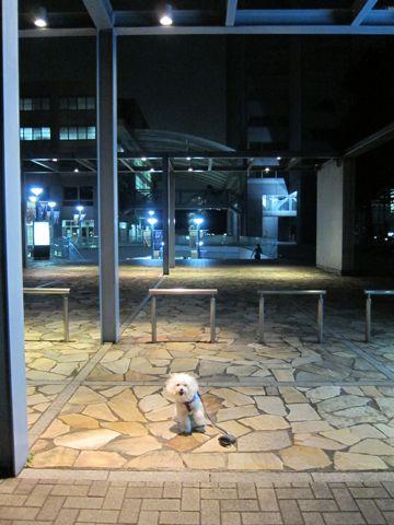 ホテル犬おあずかりペットホテル文京区ビションフリーゼトリミングフントヒュッテ東京トリミングサロンビションカット関東hundehutteかわいいビション59.jpg
