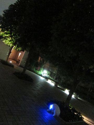 ホテル犬おあずかりペットホテル文京区ビションフリーゼトリミングフントヒュッテ東京トリミングサロンビションカット関東hundehutteかわいいビション111.jpg