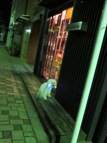 ホテル犬おあずかりペットホテル文京区ビションフリーゼトリミングフントヒュッテ東京トリミングサロンビションカット関東hundehutteかわいいビション141.jpg