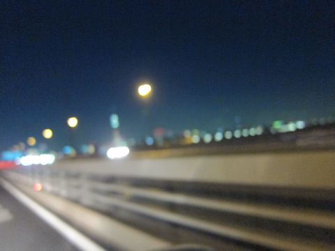 ビションフリーゼフントヒュッテ東京かわいいビションフリーゼこいぬ関東子犬文京区ペットサロンhundehutteトリミングカットモデルビションフリーゼ画像Bichon Frise9.jpg
