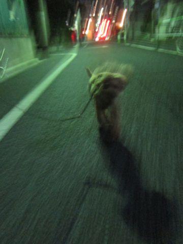 ホテル犬おあずかりペットホテル文京区トイプードルトリミングフントヒュッテ東京トリミングサロン関東hundehutteペットサロントイプードルテディベアカット17.jpg