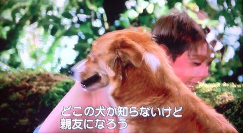 Bingo ビンゴ サーカスから逃げ出した犬のビンゴの物語 犬がしゃべる映画 犬が話す映画 犬が出る映画 犬の映画 どこの犬か知らないけど親友になろう.jpg