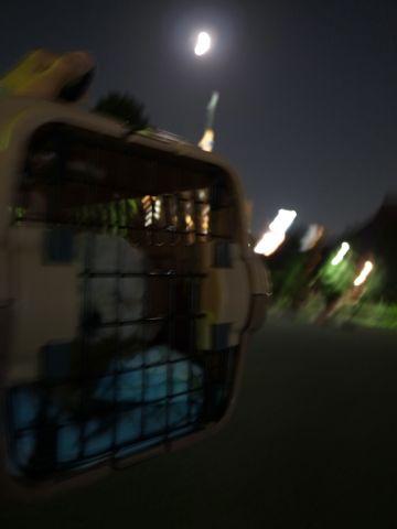 ビションフリーゼフントヒュッテ東京かわいいビションフリーゼこいぬ関東子犬文京区ペットサロンhundehutteトリミングカットモデルビションフリーゼ画像Bichon Frise237.jpg