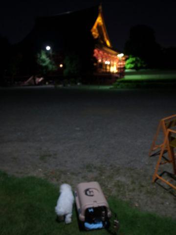 ビションフリーゼフントヒュッテ東京かわいいビションフリーゼこいぬ関東子犬文京区ペットサロンhundehutteトリミングカットモデルビションフリーゼ画像Bichon Frise259.jpg