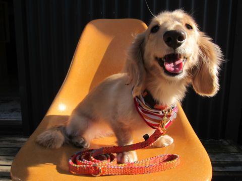 フントヒュッテオリジナル首輪カラーリードリーシュハーネスhundehutte東京かわいい犬の首輪Collarカラーわんこ首輪LeashリーシュHarnessハーネスおしゃれ犬胴輪犬モデルリード1.jpg