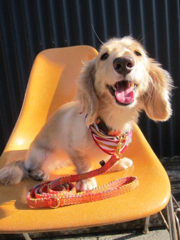 フントヒュッテオリジナル首輪カラーリードリーシュハーネスhundehutte東京かわいい犬の首輪Collarカラーわんこ首輪LeashリーシュHarnessハーネスおしゃれ犬胴輪犬モデルリード2.jpg