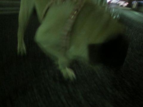 ホテル犬おあずかりペットホテル文京区パグフントヒュッテ東京トリミングサロン関東hundehutteペットサロンパグ画像パグおさんぽ時間犬ホテル料金19.jpg