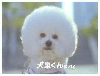 犬泉くん1.jpg