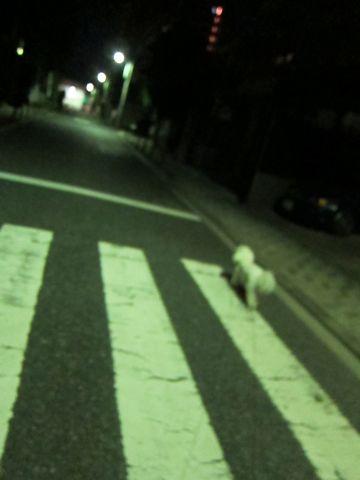 犬ペットホテルおあずかり文京区ビションフリーゼフントヒュッテ東京トリミングサロン関東hundehutteペットサロンビション画像ビションフリーゼトリミング料金53.jpg