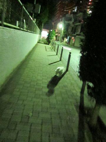 犬ペットホテルおあずかり文京区ビションフリーゼフントヒュッテ東京トリミングサロン関東hundehutteペットサロンビション画像ビションフリーゼトリミング料金87.jpg