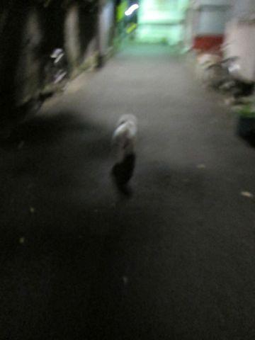 犬ペットホテルおあずかり文京区ビションフリーゼフントヒュッテ東京トリミングサロン関東hundehutteペットサロンビション画像ビションフリーゼトリミング料金91.jpg