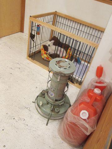 ビションフリーゼフントヒュッテ東京かわいいビションフリーゼ子犬関東こいぬ文京区hundehutteビションフリーゼ画像Bichon Friseビションフリーゼおんなのこメス子犬 240.jpg