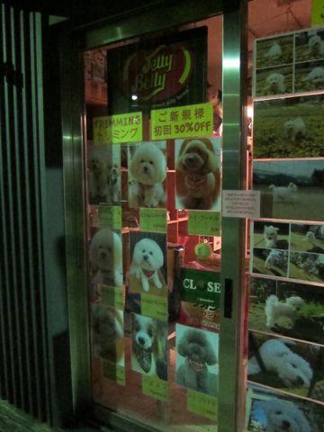 トリミングカット集犬カットモデルフントヒュッテ文京区かわいいビションフリーゼのカット東京ビションカット大きくまるく関東トイプードルカットモデル集.jpg