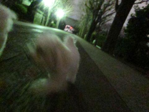 ホテル犬おあずかりペットホテル文京区フントヒュッテビションフリーゼ東京トリミングサロン関東ビションフリーゼ画像ビションフリーゼペットホテル料金表25.jpg