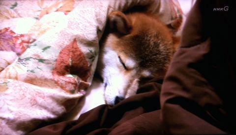 ドキュメント20min NHK さよなら、ココ 北里しっぽの会 北里大学獣医学部 成岡正基さん 人間に対して怖い思いをした犬 犬 保護 新しい飼い主を探す ココの幸せ 2.jpg