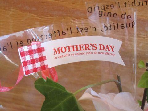 母の日 カーネーション 母の日 2014 母の日 2014年 Mothers Day マザーズデイ 母の日 英語 カーネーション 色 カーネーション 花言葉 母の日 2014年5月11日 2.jpg