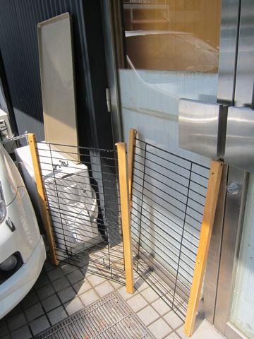 ビションフリーゼフントヒュッテ東京かわいいビション子犬関東こいぬ文京区ビションフリーゼ画像ビションフリーゼおんなのこメス子犬生まれてる都内Bichon Frise 102.jpg