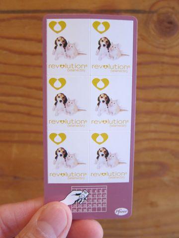 ビションフリーゼフントヒュッテ東京かわいいビション子犬関東こいぬ文京区ビションフリーゼ画像ビションフリーゼおんなのこメス子犬生まれてる都内Bichon Frise 120.jpg