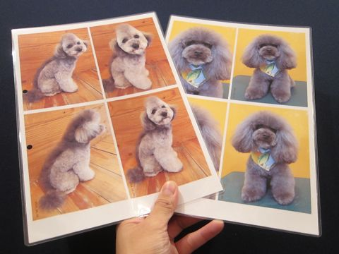 Lookbookルックブックフントヒュッテ文京区犬トリミング画像犬カットスタイル東京トリミングサロン都内ビションフリーゼカット画像トイプードルカットモデル関東1.jpg