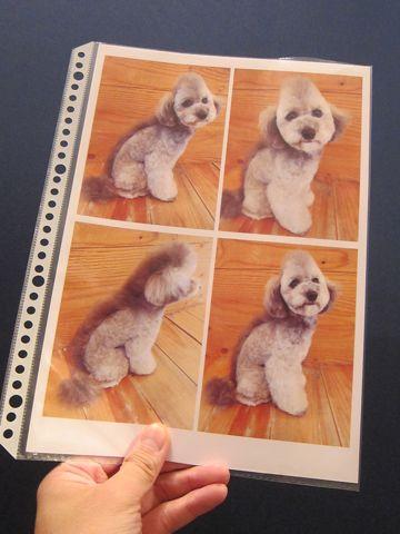 Lookbookルックブックフントヒュッテ文京区犬トリミング画像犬カットスタイル東京トリミングサロン都内ビションフリーゼカット画像トイプードルカットモデル関東2.jpg