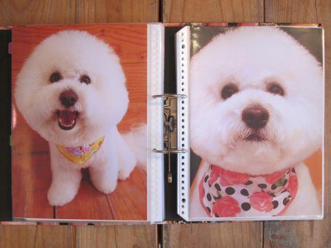 Lookbookルックブックフントヒュッテ文京区犬トリミング画像犬カットスタイル東京トリミングサロン都内ビションフリーゼカット画像トイプードルカットモデル関東5.jpg