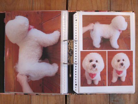 Lookbookルックブックフントヒュッテ文京区犬トリミング画像犬カットスタイル東京トリミングサロン都内ビションフリーゼカット画像トイプードルカットモデル関東6.jpg