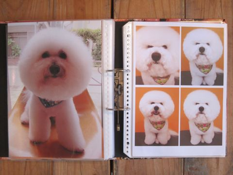Lookbookルックブックフントヒュッテ文京区犬トリミング画像犬カットスタイル東京トリミングサロン都内ビションフリーゼカット画像トイプードルカットモデル関東7.jpg