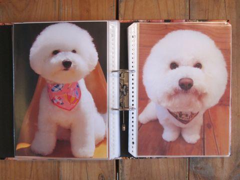 Lookbookルックブックフントヒュッテ文京区犬トリミング画像犬カットスタイル東京トリミングサロン都内ビションフリーゼカット画像トイプードルカットモデル関東8.jpg