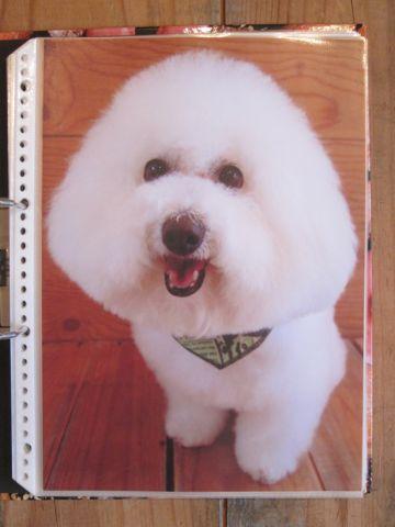 Lookbookルックブックフントヒュッテ文京区犬トリミング画像犬カットスタイル東京トリミングサロン都内ビションフリーゼカット画像トイプードルカットモデル関東10.jpg
