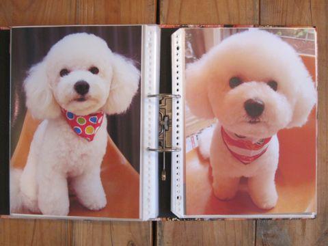 Lookbookルックブックフントヒュッテ文京区犬トリミング画像犬カットスタイル東京トリミングサロン都内ビションフリーゼカット画像トイプードルカットモデル関東11.jpg