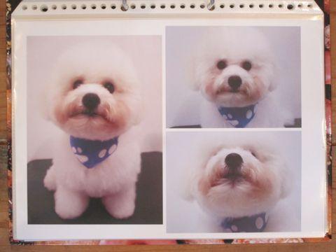 Lookbookルックブックフントヒュッテ文京区犬トリミング画像犬カットスタイル東京トリミングサロン都内ビションフリーゼカット画像トイプードルカットモデル関東15.jpg
