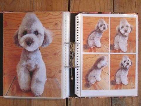 Lookbookルックブックフントヒュッテ文京区犬トリミング画像犬カットスタイル東京トリミングサロン都内ビションフリーゼカット画像トイプードルカットモデル関東16.jpg