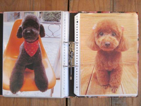 Lookbookルックブックフントヒュッテ文京区犬トリミング画像犬カットスタイル東京トリミングサロン都内ビションフリーゼカット画像トイプードルカットモデル関東20.jpg