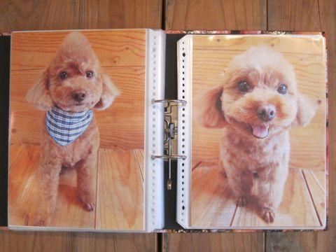 Lookbookルックブックフントヒュッテ文京区犬トリミング画像犬カットスタイル東京トリミングサロン都内ビションフリーゼカット画像トイプードルカットモデル関東21.jpg