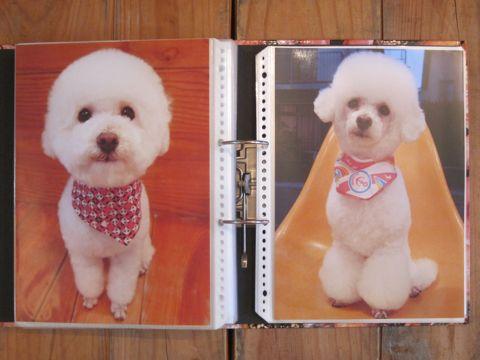 Lookbookルックブックフントヒュッテ文京区犬トリミング画像犬カットスタイル東京トリミングサロン都内ビションフリーゼカット画像トイプードルカットモデル関東22.jpg