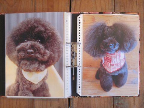 Lookbookルックブックフントヒュッテ文京区犬トリミング画像犬カットスタイル東京トリミングサロン都内ビションフリーゼカット画像トイプードルカットモデル関東23.jpg