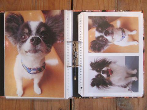 Lookbookルックブックフントヒュッテ文京区犬トリミング画像犬カットスタイル東京トリミングサロン都内ビションフリーゼカット画像トイプードルカットモデル関東24.jpg
