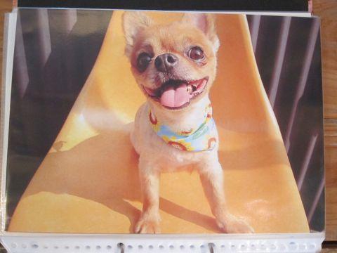 Lookbookルックブックフントヒュッテ文京区犬トリミング画像犬カットスタイル東京トリミングサロン都内ビションフリーゼカット画像トイプードルカットモデル関東26.jpg