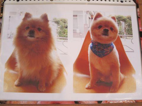 Lookbookルックブックフントヒュッテ文京区犬トリミング画像犬カットスタイル東京トリミングサロン都内ビションフリーゼカット画像トイプードルカットモデル関東28.jpg