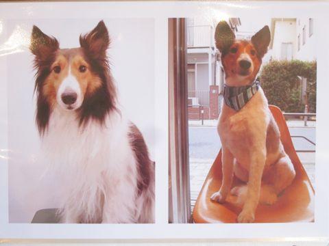 Lookbookルックブックフントヒュッテ文京区犬トリミング画像犬カットスタイル東京トリミングサロン都内ビションフリーゼカット画像トイプードルカットモデル関東29.jpg