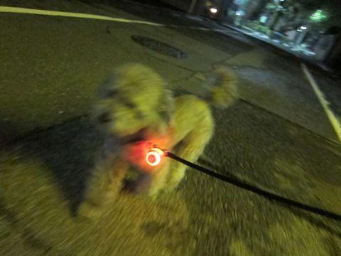 トイプードルトリミング文京区フントヒュッテトイプードルデザインカットモデル東京トイプーモヒカンカット画像トイプードルシルバー犬ハーブパック50.jpg