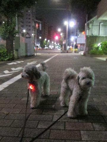 トイプードルトリミング文京区フントヒュッテトイプードルデザインカットモデル東京トイプーモヒカンカット画像トイプードルシルバー犬ハーブパック53.jpg